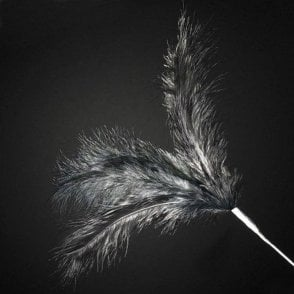 Black - 3 Feather Spray Cake Decoration 28cm - Pack of 6